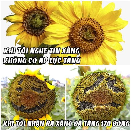 anh-che-gia-xang-tang-lan-thu-tu-lien-tiep
