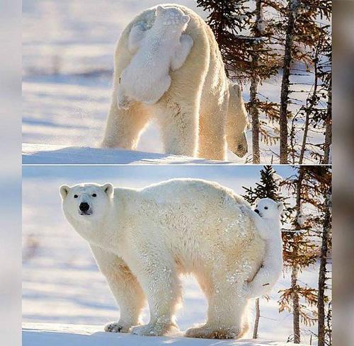 Khi gấu con chơi trốn tìm.