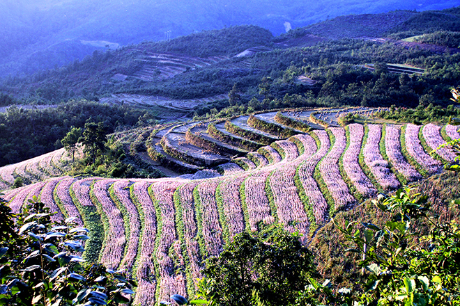 Cao nguyên Hà Giang mùa này đá đã nở hoa