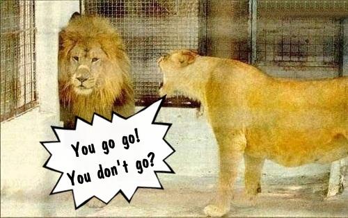Cãi nhau với bạn trai người Mỹ: You go! You go no go? You no go so Igo!nói nhanh quá thành gâu gâu gâu.