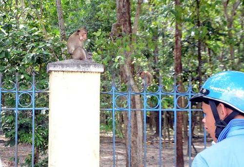 Bầy khỉ trong nội ô Tòa thánh Cao Đài Tây Ninh. Ảnh: Thái Hà