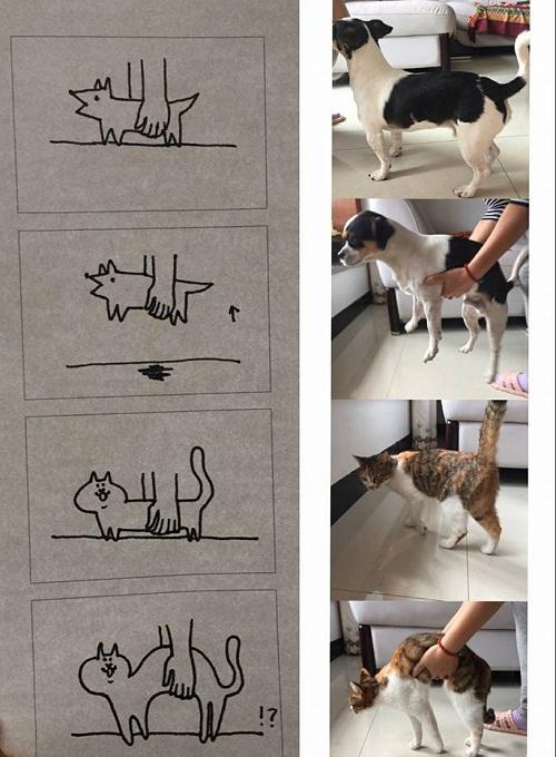 Sự khác biệt giữa chó và mèo.