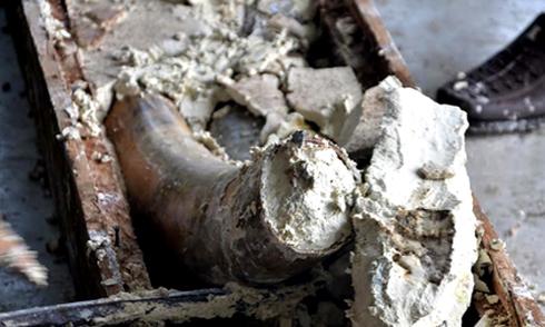 Ngà voi giá 40 tỷ trong ruột gỗ cập cảng ở Sài Gòn