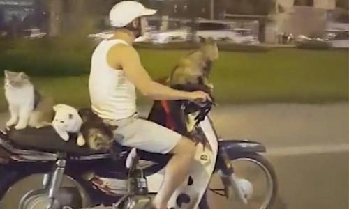video-xe-may-cho-4-con-meo-o-viet-nam-thu-hut-mang-xa-hoi-anh