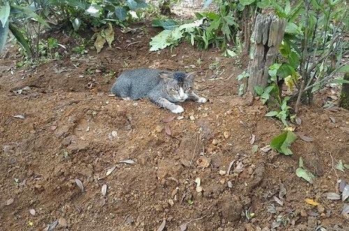 Ảnh 2: Con vật nhỏ không chịu rời khỏi ngôi mộ (Ảnh: SWNS)