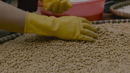 Người dân đang dùng tay nhặt những hạt đậu tương không đạt tiêu chuẩn. Ảnh: bizmedia