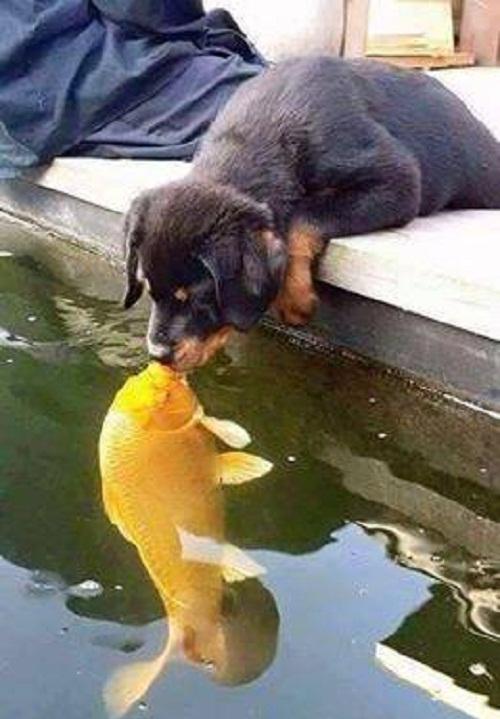 Trao nhau nụ hôn nồng thắm.