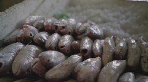 Cá sau khi được làm sạch sẽ được cho vào thùng xốp ướp đá. Ảnh: bizmedia