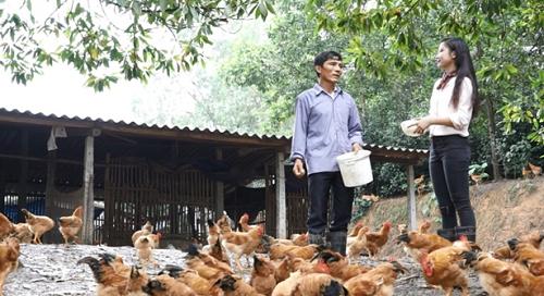 Mô hình chăn nuôi gà sạch đạt chuẩn VietGap đã giúp ổn định chất lượng cho gà đồi Phú Bình, đem lại niềm vui cho nhiều người nuôi như anh Thủy. Ảnh: BizMedia