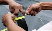 Bắt được cá trê to sau cơn mưa trung tâm Sài Gòn