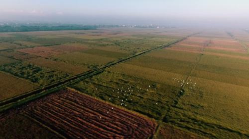 Những cánh đồng lúa rộng lớn tại Bắc Ninh. Ảnh: Bizmedia.