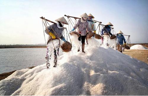 Diêm dân Bạch Long thu hoạch muối thô. Ảnh: Sentour.com.vn