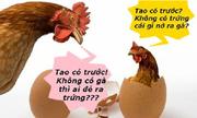 Ảnh chế con gà có trước hay quả trứng có trước?