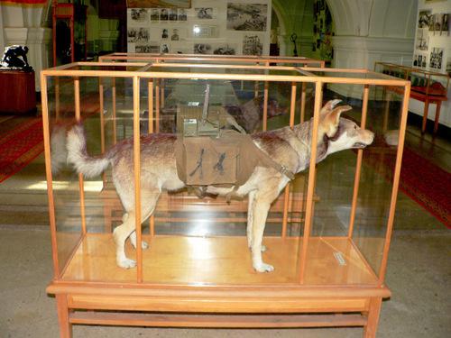 Chó chống tăng - vũ khí đáng sợ trong Thế chiến II - ảnh 2