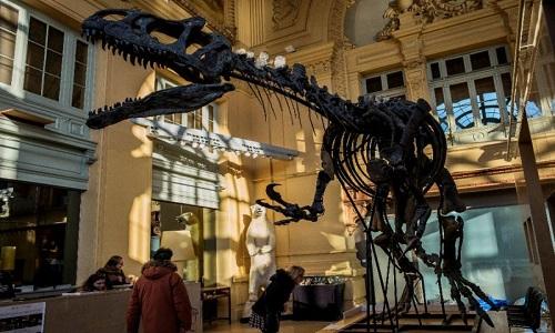 Bộ xương triệu USD của con khủng long ăn thịt chết trong lúc chạy