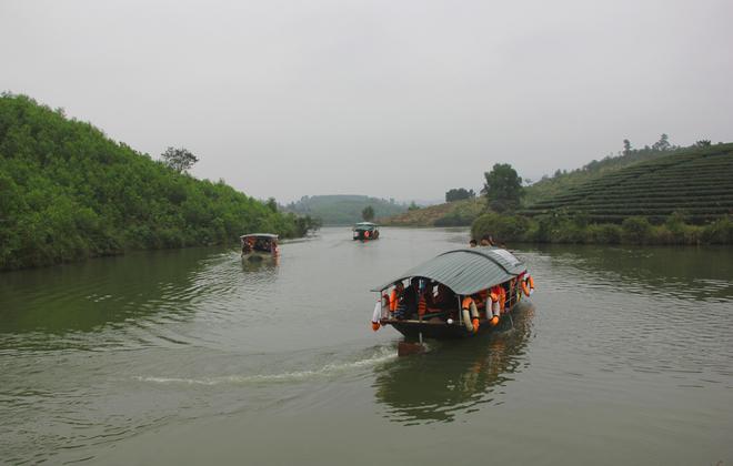 Du khách đổ xô đến đảo chè xanh mướt xứ Nghệ
