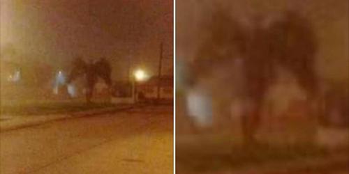 Ảnh chụp một vật thể kỳ lạ màu đen ở bên đường