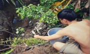 video-dao-hang-bat-moi-chua-trong-to-nghin-con-xem-nhieu-tuan-qua-8