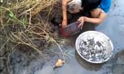 video-dao-hang-bat-moi-chua-trong-to-nghin-con-xem-nhieu-tuan-qua-9