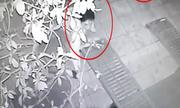 Thanh niên gồng mình nhổ trộm cây cảnh Tết