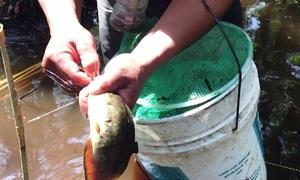 Lội vào rừng U Minh câu cá trê