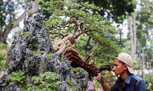 Nhiều cây độc lạ ở hội hoa xuân lớn nhất Sài Gòn