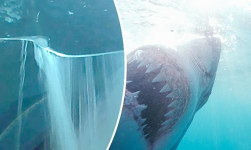 Vệt nứt ở bể kính chứa cá mập khiến nhiều người ở Mexico sợ hãi. Ảnh minh họa: Sun