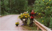 Nam phượt thủ vặt sạch hoa dã quỳ bên đường gây bão mạng