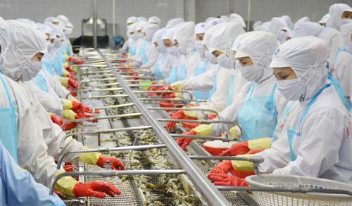 Thủ tướng: Xuất khẩu tôm cần đạt 10 tỷ USD năm 2025 - ảnh 1