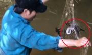 Đi giăng lưới cá nhưng dính toàn rắn