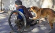 5 video cún cưng được chia sẻ chóng mặt