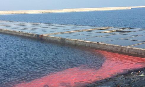 Dải nước đỏ dài 50 m ở cảng Vũng Áng