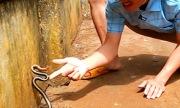 Thanh niên đùa giỡn rắn hổ ngựa trong sân nhà