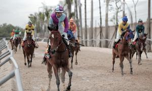 Một ngày chăm sóc ngựa ở trường đua 100 triệu USD