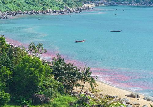 Đà Nẵng xác minh vệt nước đỏ ở bán đảo Sơn Trà