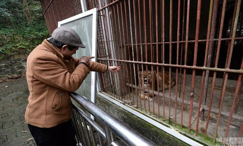 Chủ vườn thú bị chỉ trích vì cho động vật ăn thịt nhau