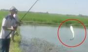 Hai cao thủ câu được thùng cá lóc bằng nhái