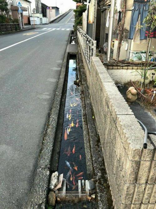 Cống nước ở Nhật Bản.