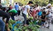 Người Sài Gòn 'giải cứu' chuối Tây Ninh