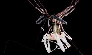 Một giờ nứt mình lột xác của nhện chân dài