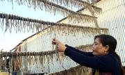 Làng nghề khô cá khoai ở miền Tây vào mùa