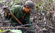 Băng rừng đào chem chép vào mùa ngon nhất trong năm