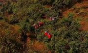 Hơn 4.000 ha chè shan tuyết cổ thụ hữu cơ trên đỉnh Hoàng Su Phì