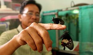 Người đàn ông 20 năm nuôi sâu nhân giống các loài bướm