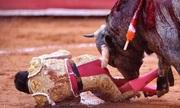Bò tót 500 kg nổi điên húc thủng trực tràng đấu sĩ Mexico