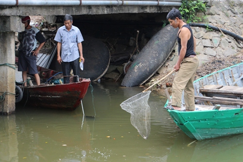 Cá chết quanh vùng nước màu vàng trên biển Thừa Thiên Huế