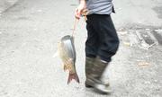 Người phụ nữ 'dắt' cá đi bán dạo ở Hà Nội