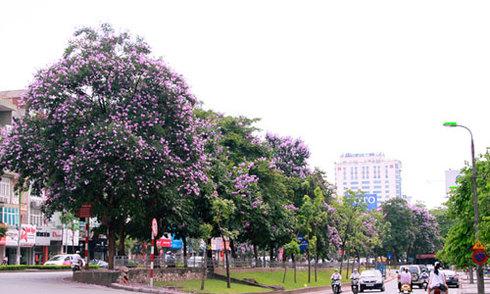 Cây xanh đô thị Việt Nam chỉ bằng 1/10 thế giới