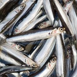 Cách gọi các loài cá trong tiếng Anh