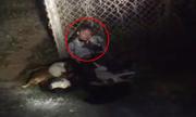 Cẩu tặc bị dân trói gục bên 5 xác chó